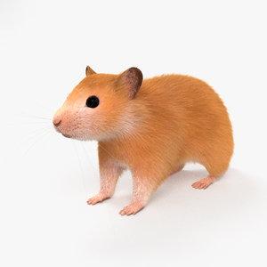 hamster mammal animal 3D