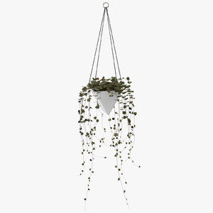 3D hanging house plant 03 model