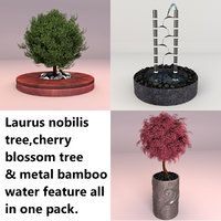 trees laurus nobilis cherry blossom 3d model