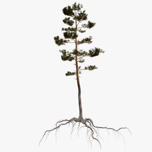 3D pine tree 6