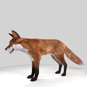 3D model fox animal mammal