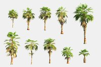 china palm pack 10 3D model