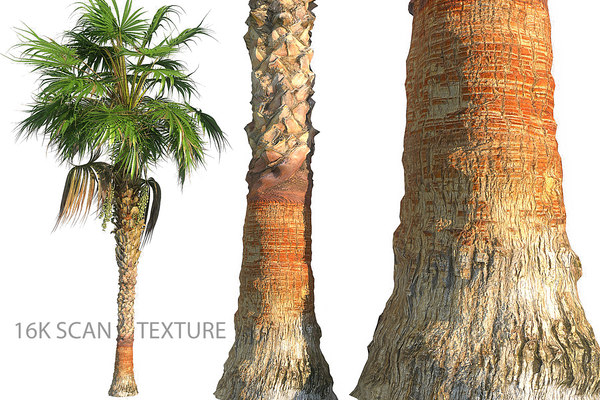 china palm 3D model