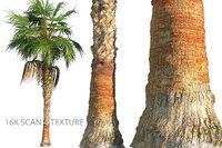 China Palm Animated HD
