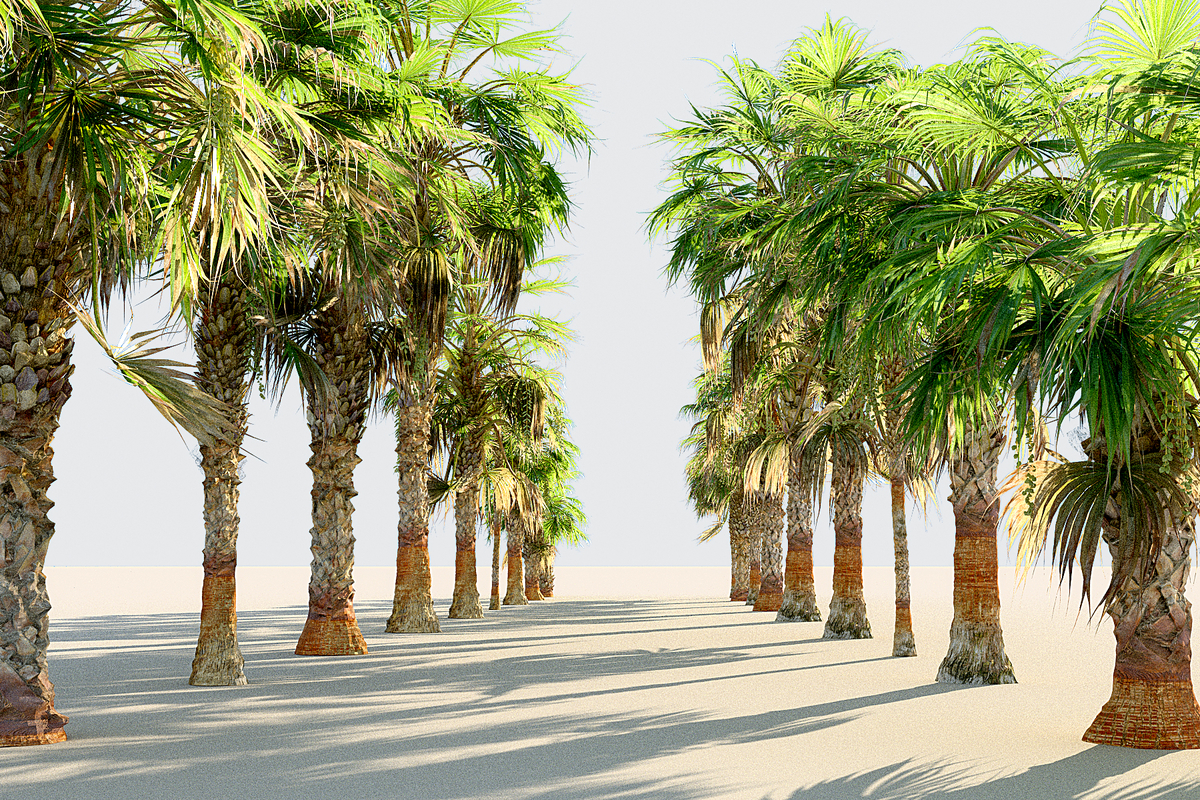 china palm pack 10 3D model