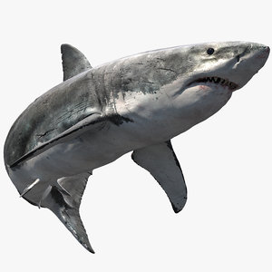 realistic shark rigged 3D model