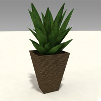 3D small house plant model