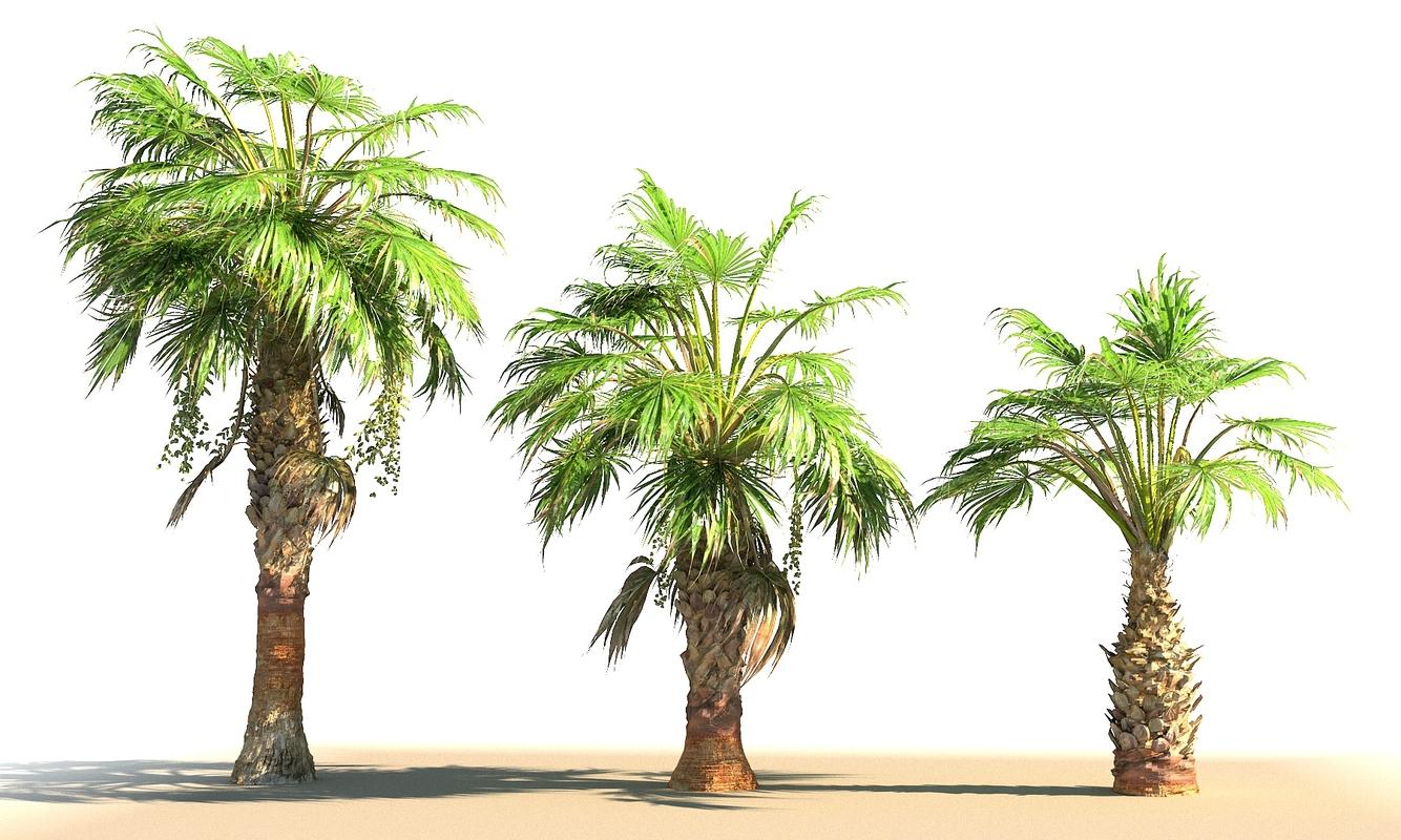 china palm pack tree 3D