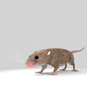 mouse micromus model