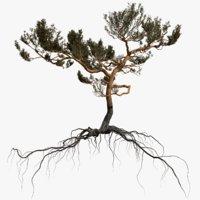 3D pine tree 7