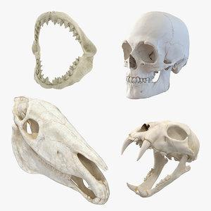 skulls 2 3D model