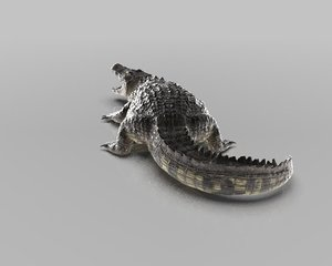 3D realistic crocodile model