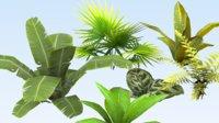 set tropical plant model