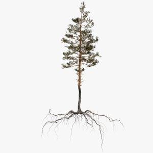 pine tree 9 model