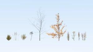 dried plants 3D
