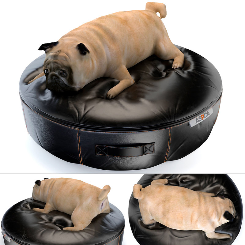 dog pet model