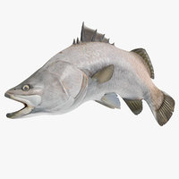 barramundi fish swimming pose 3D model