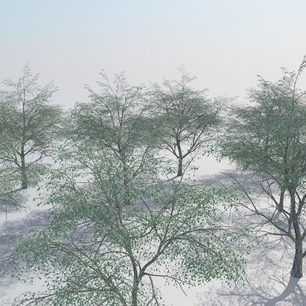 realistic oak woods trees 3D model