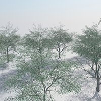 realistic oak woods trees 3D model