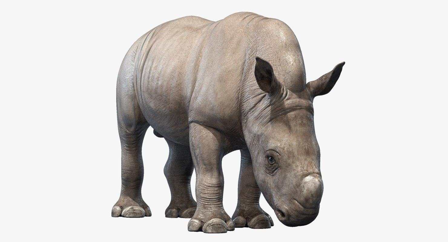3D big rhino baby rigged