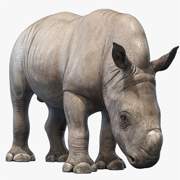 3D big rhino baby rigged