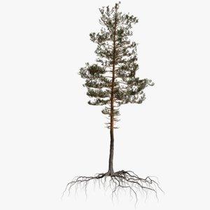 pine tree 10 model