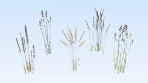 cereals grass 3D model