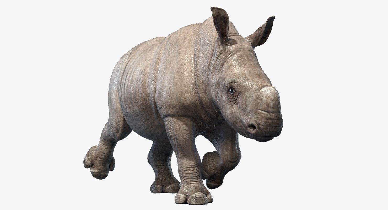 big rhino baby animations 3D model
