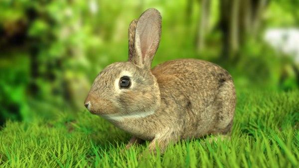 rigged rabbit 3D model