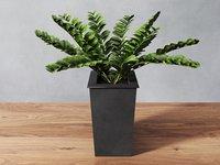 zamioculcas zamiifolia plant zz 3D