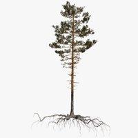 pine tree 11 model