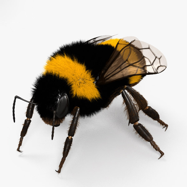 3D bumblebee bumble bee model