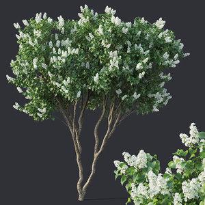 lilac tree model