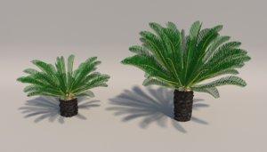 sago palms revoluta 3D