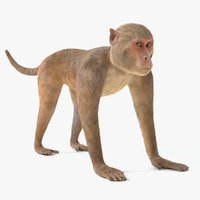 monkey pbr polys 3D model