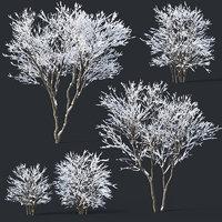 3D lilac bushes snow