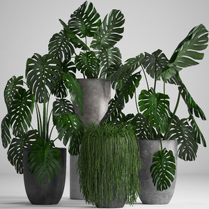 3D home plants exotic
