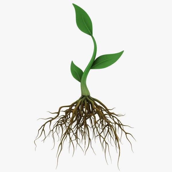 plant roots model