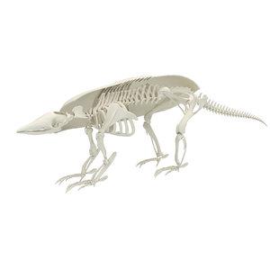 3D armadillo skeleton model