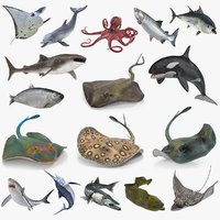 Rigged Fishes 3D Models Collection 4