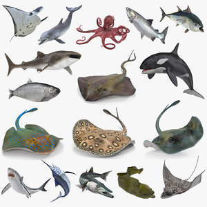 3D rigged fishes 4