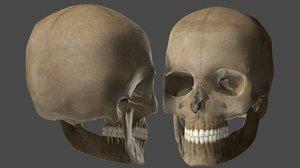 skull teeth 3D model