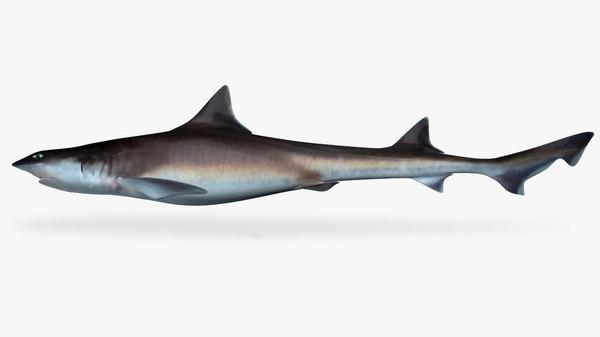3D whitemargin smoothhound shark