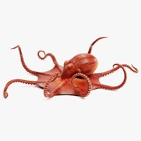 3D model giant pacific octopus rigged