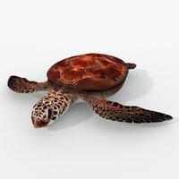 3D green turtle model