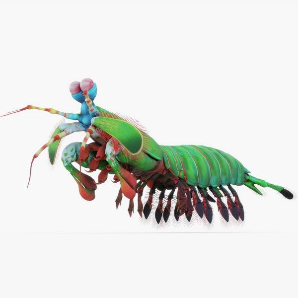 3D rigged mantis model