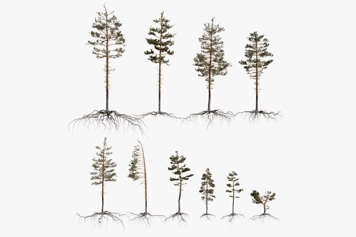 pine tree packed 3D model