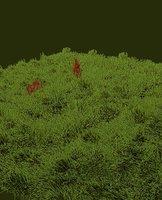 Grass Savan