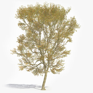 realistic tree plane 3D
