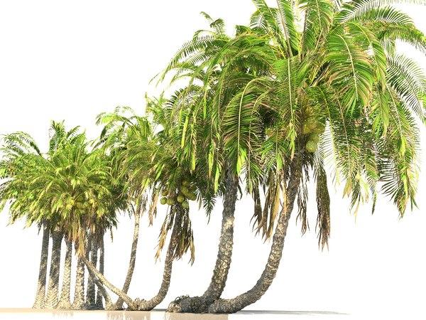 coconut palm pack 12 3D